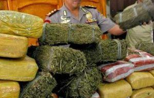 penggerebakan narkoba 1
